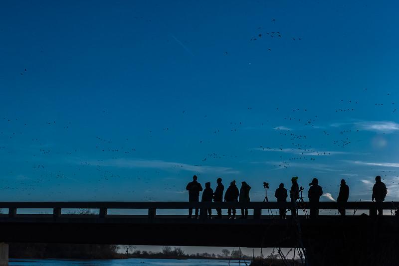 Crane watchers on the Gibbon Bridge, Nebraska
