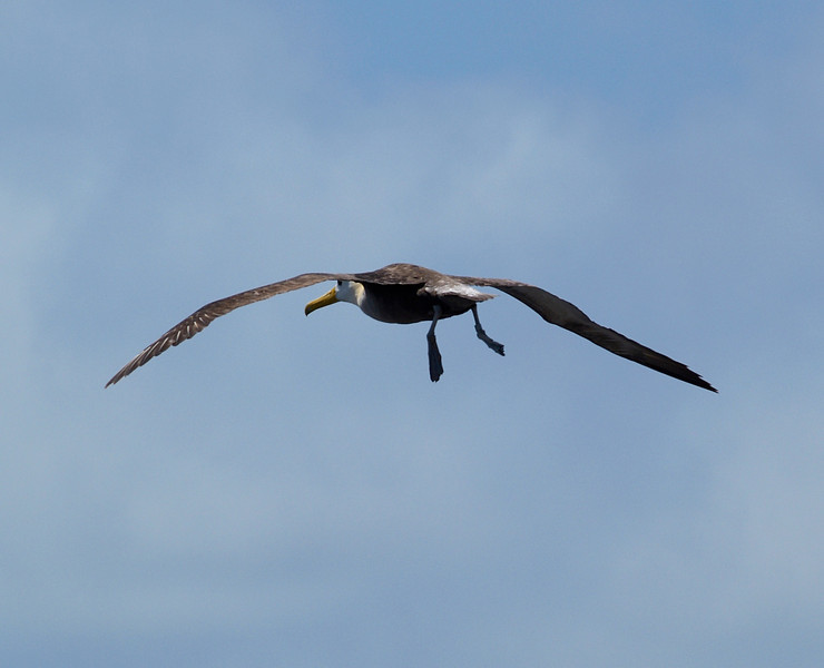 Gear and flaps down. Albatross prepares to land.