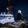 Bald eagle and Coast Guard vessel at Neah Bay, Olympic Peninsula, Washington State
