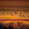 Sandhill Cranes in flight over the Platte River at sunset near Kearney, Nebraska