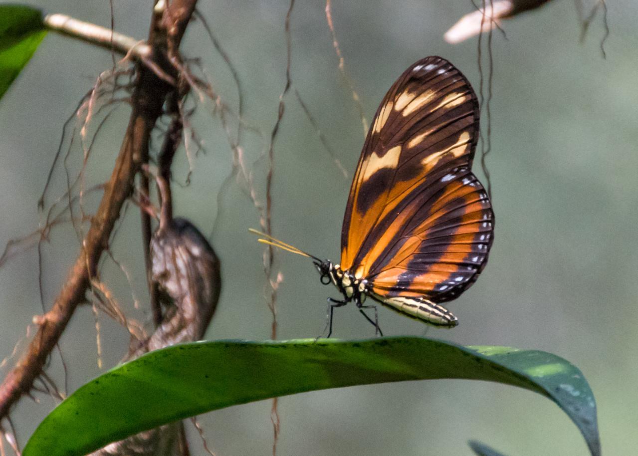Green Hills Butterfly Ranch, Belize