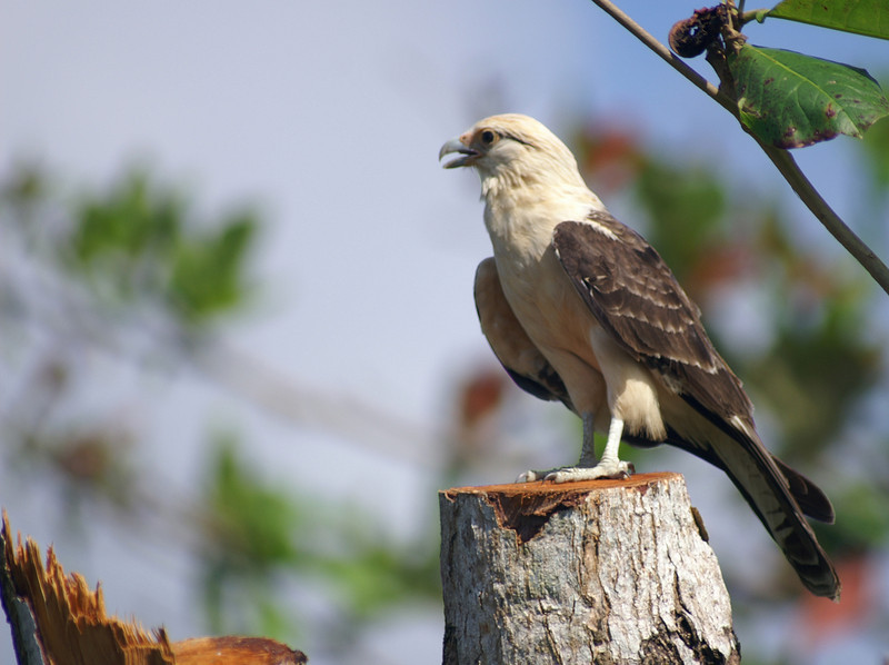 Corcavada, Costa Rica