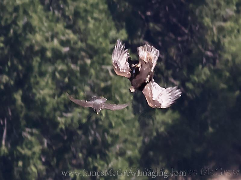 The falcon passes the eagle.