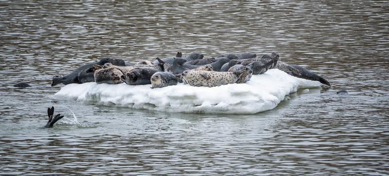 Ice Passengers