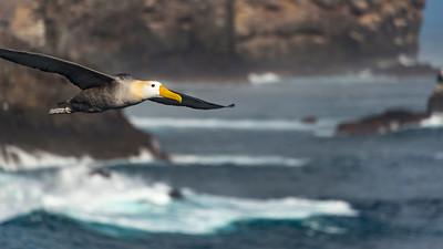 CRV_4271 Galapagos, Espanola