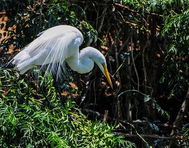 High Island birding 493 6-22-12