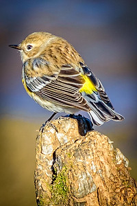 Bagnell Birds-6