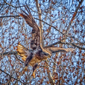 Bagnell Birds-7