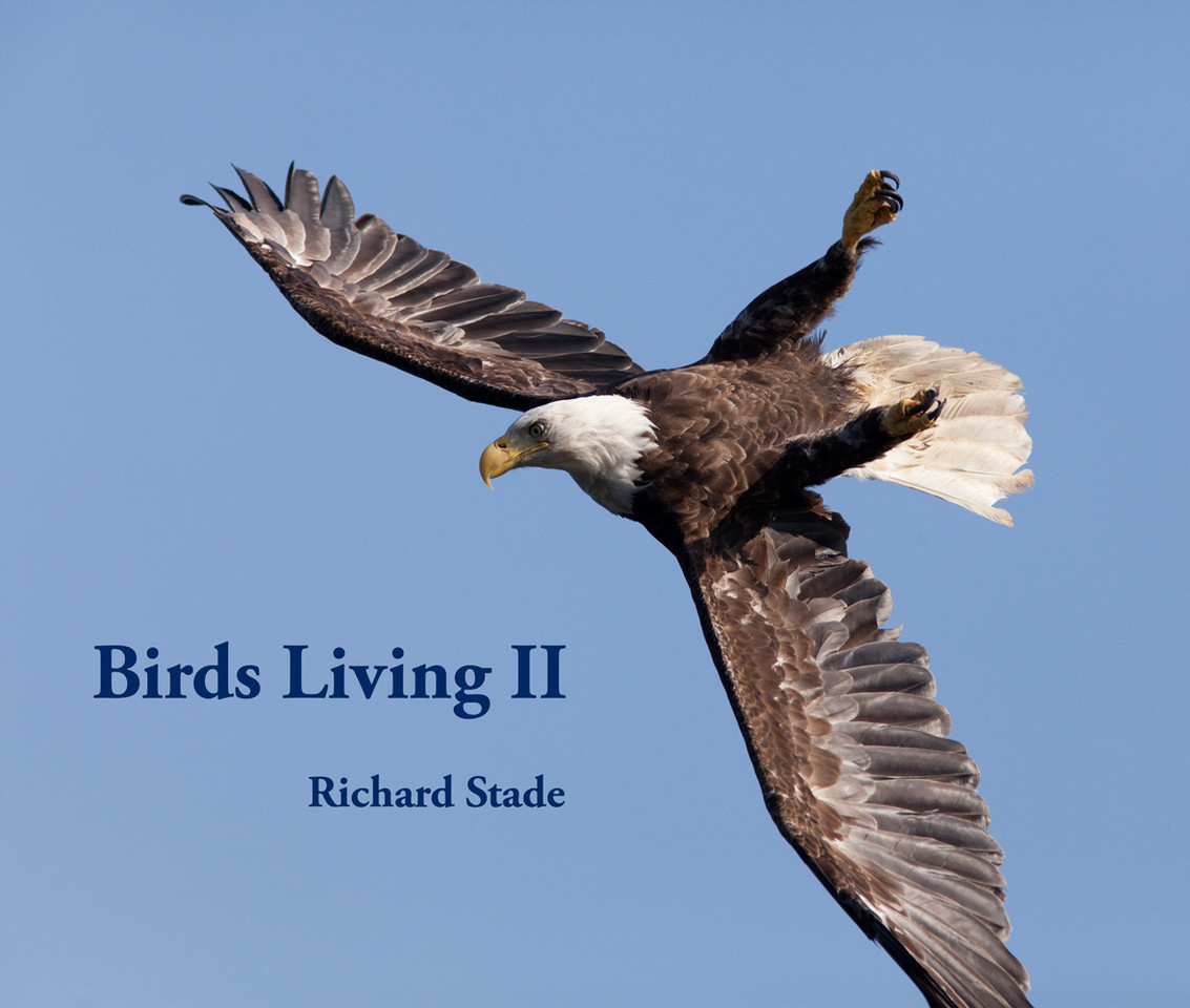 "Birds Living II 160 pages 13"" x 11"" Format 85 full page photographs plus 9 less than full page photographs. Hardback with dust cover Published by Blurb and avaialable at  http://www.blurb.com/bookstore/detail/1195368 $105 plus postage  To Order contact Richard Stade at  RStadePhotos@yahoo.com"
