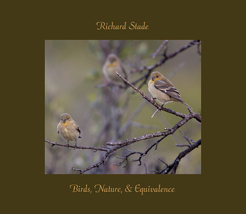 """Birds, Nature and Equivalence explores the world of birds - habitat, eating and drinking, family, and coloring. Beyond these ornithological considerations the photographs explore the human response to these beautiful, amazing, yet common creatures. The relationship between the emotions that the viewer feels and the photograph was termed Equivalence by Alfred Stieglitz. This book is both a celebration of the birds and of the viewer's own experiences and emotional reaction.  136 pages with 73 images 14""""(w) x 12""""(h)  Published by Edition One custom book makers Hardback with dust cover  To Order contact Richard Stade at  RStade@yahoo.com"""