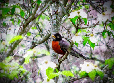 The Robin and The Dogwood