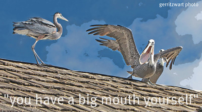 Heron and Pelican on the roof.................