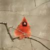 Scarlet Symmetry