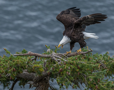 Protecting the nest site.