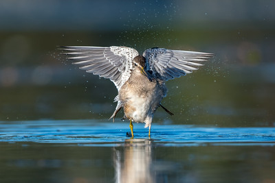 Wing Flip