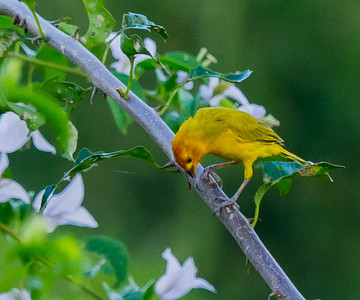 Birds of Colombia