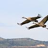 Pair of Cranes