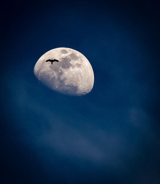 Kite on the Moon