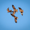 Spinnning Kites