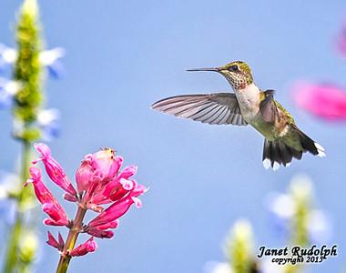 Birds of Long Island, NY