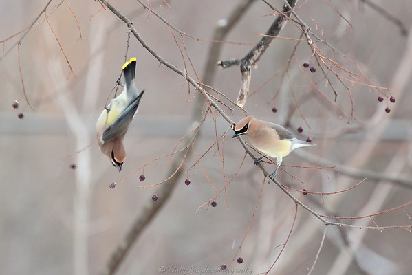 Birds of the Hudson Valley in New York State.