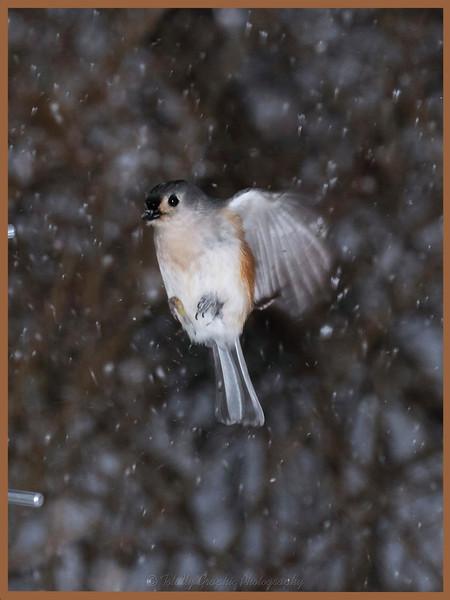 A Snowy Landing