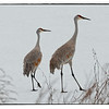 A pair of Sandhill Cranes in Ulster Park ny March 2014