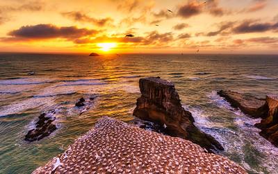 Muriwai, Sunset
