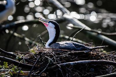 Nesting coromant
