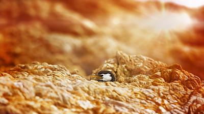 Black Shag Hiding Out