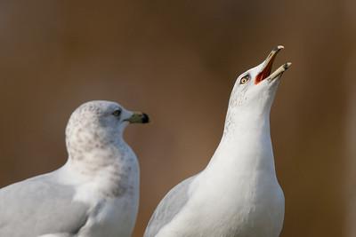 Gull jokes
