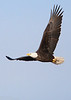 Bald Eagle over the Fox River-2