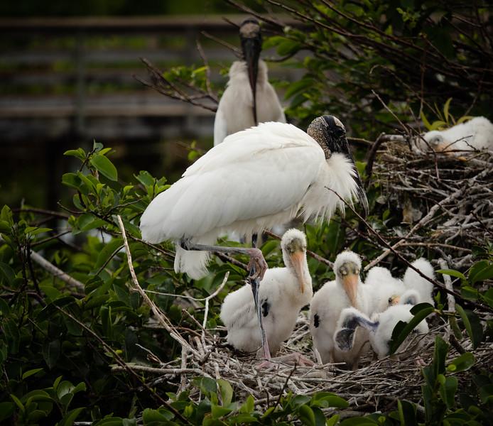 FloridaBirds (24 of 378).jpg