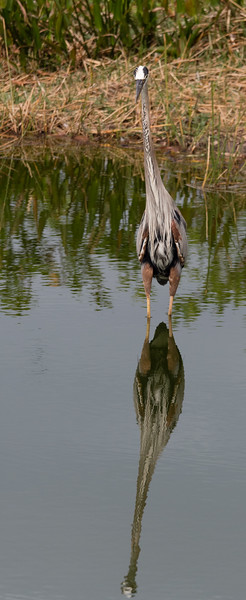 FloridaBirds (45 of 378).jpg