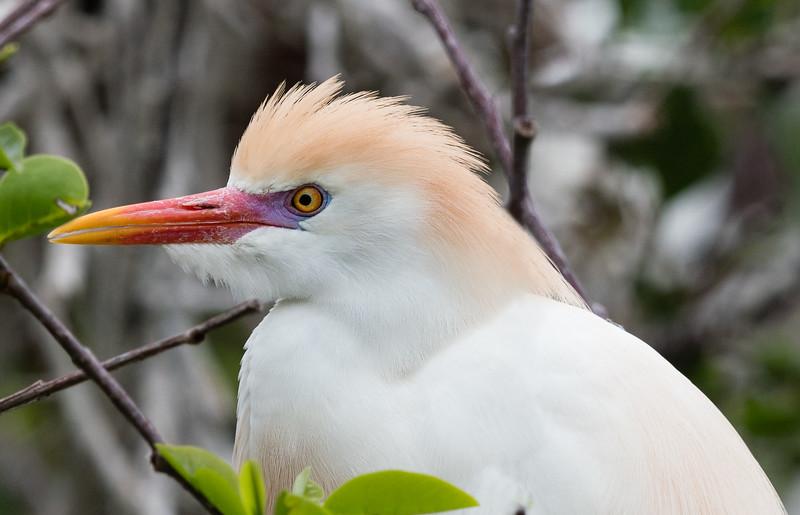 FloridaBirds (13 of 378)-Edit.jpg