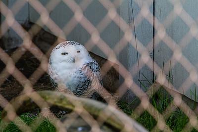 birds-of-prey-9580