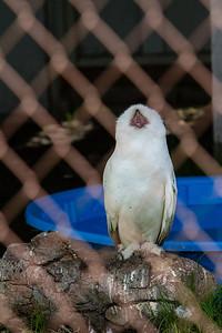 birds-of-prey-9589