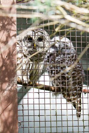 birds-of-prey-9547