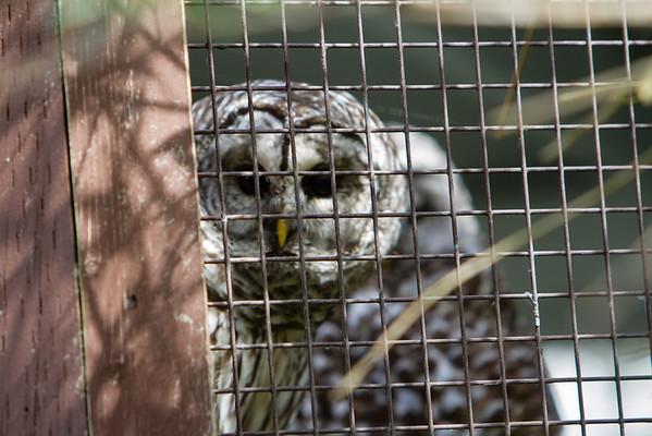 birds-of-prey-9539