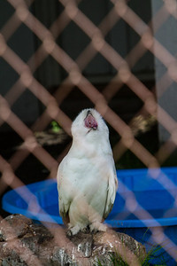 birds-of-prey-9569