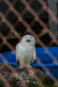 birds-of-prey-9564