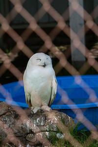birds-of-prey-9586