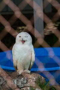 birds-of-prey-9593
