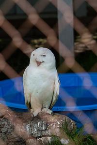 birds-of-prey-9594