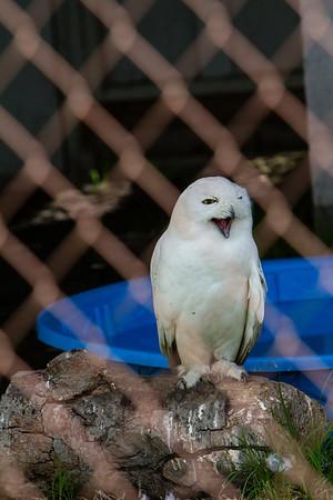 birds-of-prey-9583