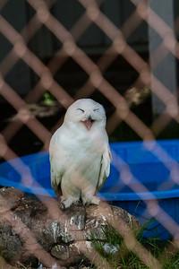 birds-of-prey-9571