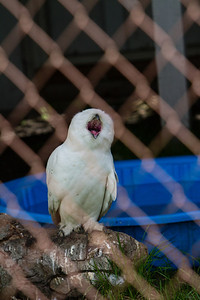 birds-of-prey-9568