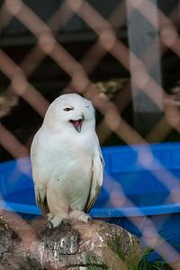 birds-of-prey-9584