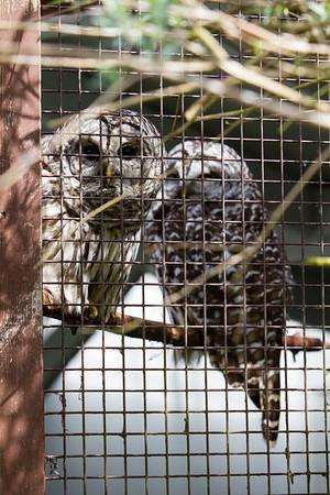 birds-of-prey-9548