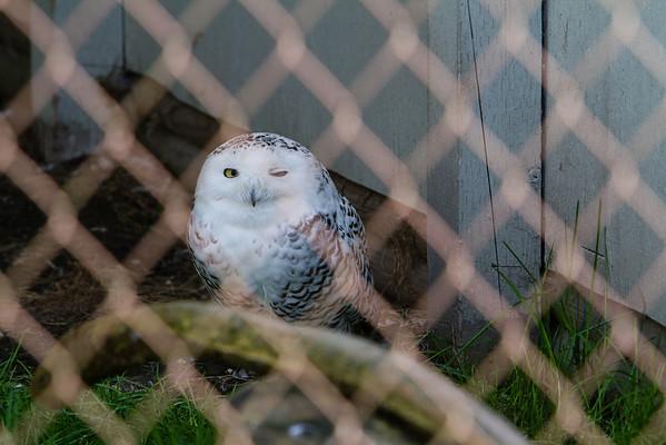 birds-of-prey-9579